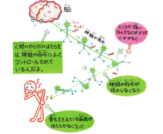 人間の体は神経の命令によってコントロールされている