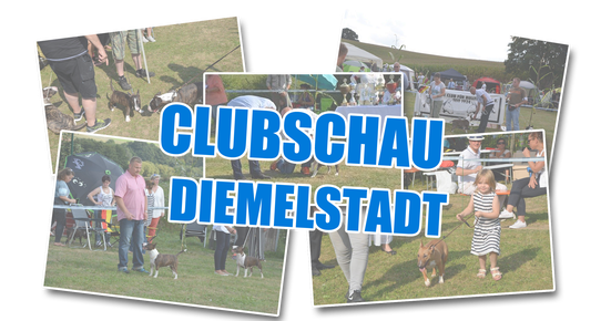 Clubschau Diemelstadt