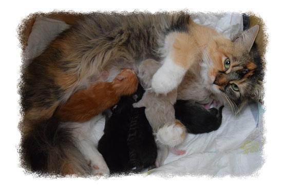 Deutsch Langhaar Kitten