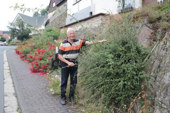 Karl Zwermann bei seiner Rosa Canina. Schon als Kind stand er an dieser Stelle in der Neuen Straße und hat die genügsame Rose bewundert. Foto: Konder