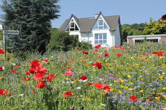 An der Bergstraße blüht es jedes Jahr aufs Neue, und auf der bunten Blumenwiese finden Bienen reichlich Futter. Foto: Konder