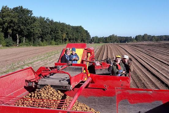 Der Kartoffelanbau: traditionell das wichtigste Standbein unseres Familienbetriebes