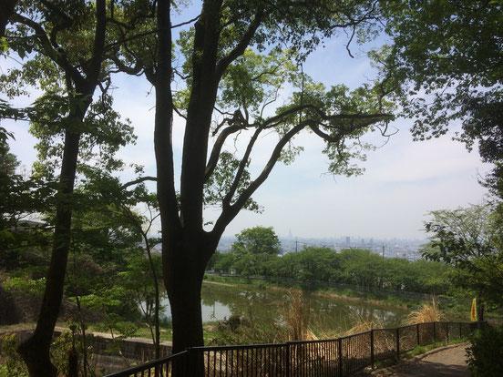 日下新池(筆者撮影)