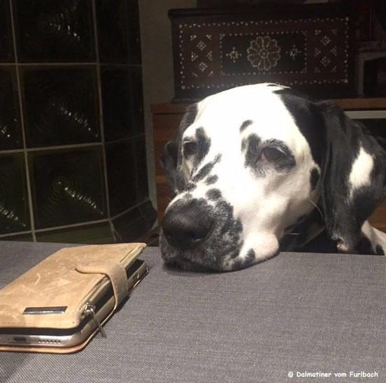 June Carter vom Furlbach (Emmy) wartet auf einen Anruf...20.11.2016