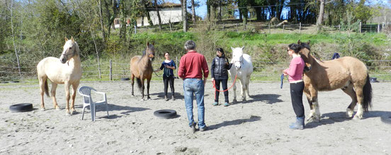 stage-cheval-adulte