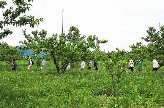 皆でテクテク歩く。 歩くところだけ、難波さんが草を刈ってくださっていました