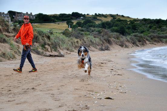 Ecosse Aberlady Bay plage Chien berger australien Edimbourg road trip voyage