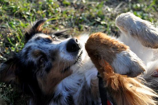 C'est bien mon chien.. soumets toi à ton maître ! niark niark