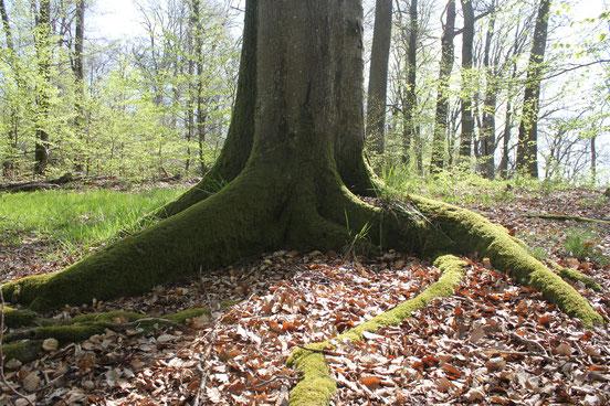 Breit angelegte Daseinsvorsorge: Wälder. Foto: S. Ecker