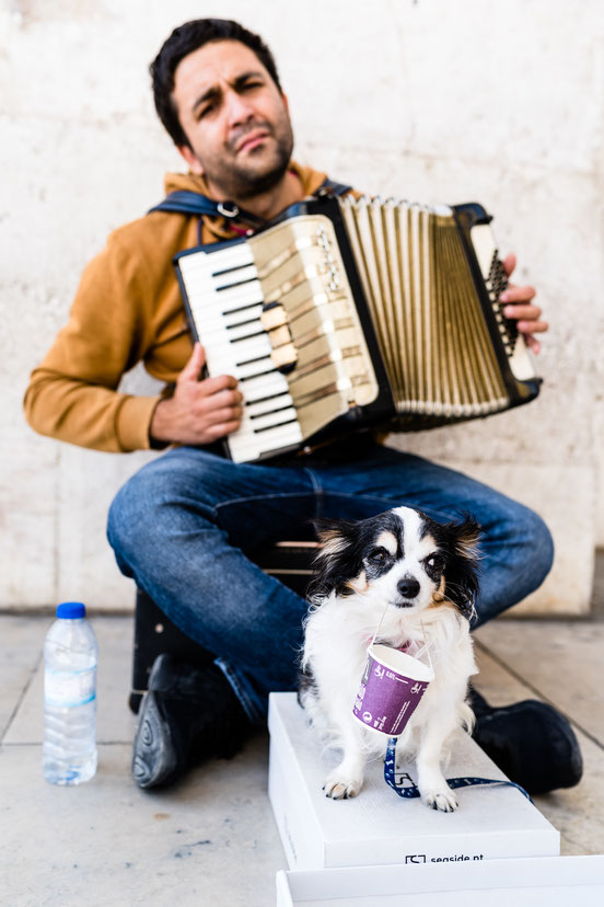 Street musician with his dog