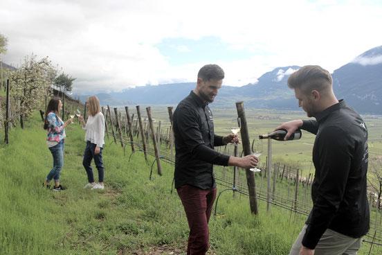 Weinschmeckeria der Ausblick auf den Weinberg