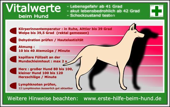 Bild: mit freundlicher Genehmigung von www.erste-hilfe-beim-hund.de