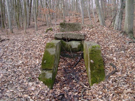 Quelle. In diesem Wald gibt es etliche.