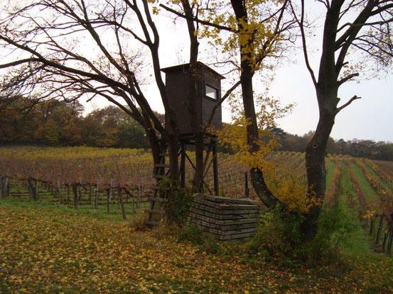 Ein Hochstand am Rand der Weinrieden in Wien-Mauer an der Südseite des Maurer Berges