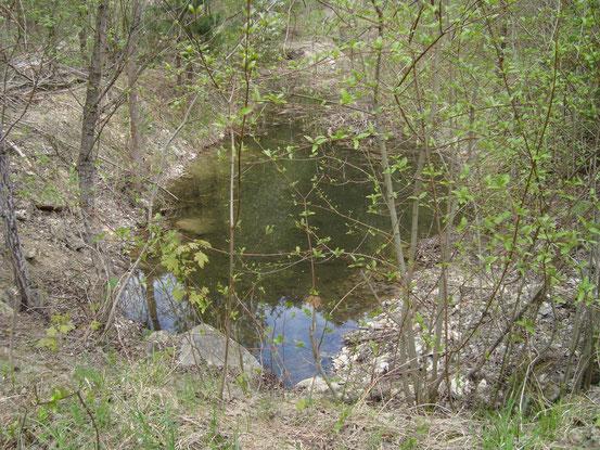 Der Ablauf des Steinbruchsees. Gespeist wird der See durch Quellen. Eine habe ich unmittelbar neben dem Ufer gesehen.