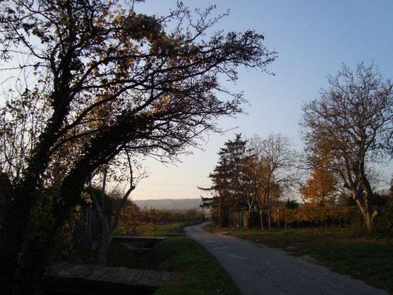 In den Gabrissen durch die Weingärten in Wien-Stammersdorf. Die Strasse ist benannt nach einem historischen Flurnamen.