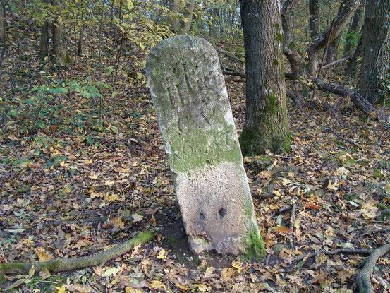 Alter Grenzstein aus 1637 im Maurer Wald bei der Himmelswiese