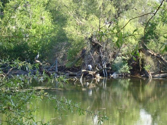 Die Reiher-Insel im Floridsdorfer Wasserpark