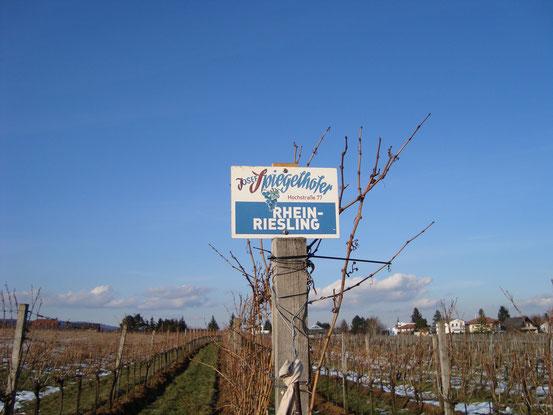 Weinbau Josef Spiegelhofer (Website: Klick aufs Bild)