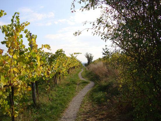 Kaisersteig durch den Weingarten