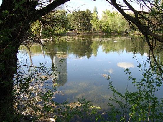 Am Sonntag, 26.04.2015, machte ich eine Runde im Floridsdorfer Wasserpark (Bild-Klick)