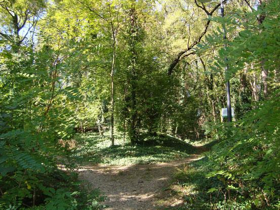 Viele verschlungene Wege im Sternwartepark, die aber zum Teil nicht betreten werden dürfen. Hier kann sich die Natur entfalten, weshalb sich seltene Vogelarten, Schmetterlinge, Füchse und auch Dachse angesiedelt haben.