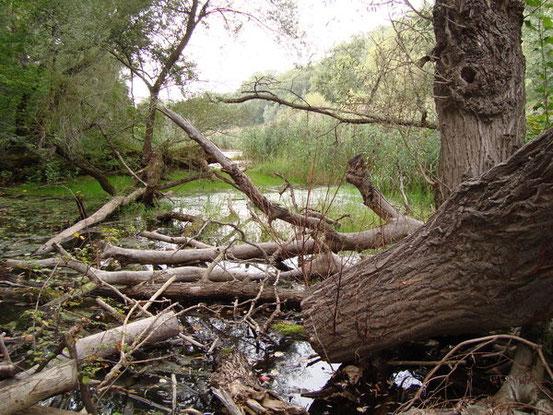 Mauthnerwasser in den Praterauen