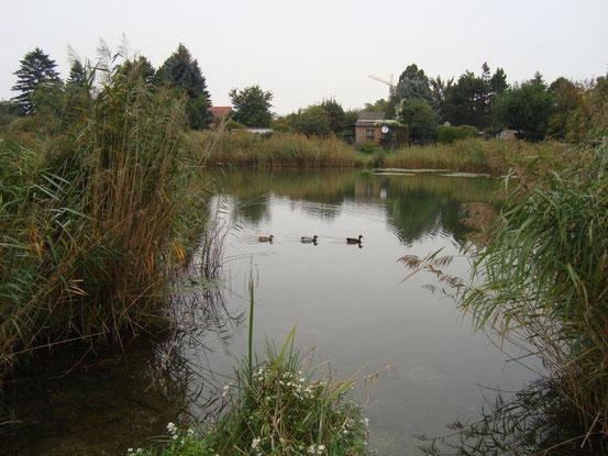 Drei Enten diszipliniert im oberen Mühlwasser