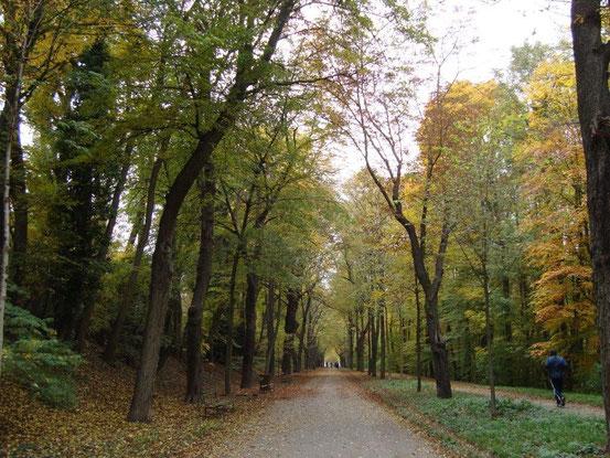 Die Schwarzenbergallee im Erholungsgebiet Schwarzenbergpark, 1170 Wien