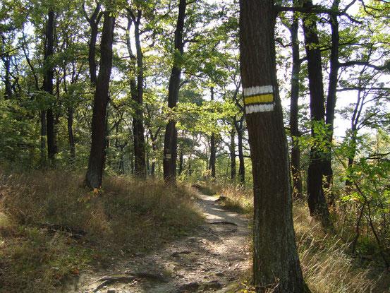 Auf der gelben Markierung vom Sommerhaidenweg in Salmannsdorf bis Geroldgasse in Neuwaldegg