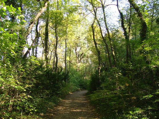 Weg an der Nordseite des Sternwarteparks. 'Im Wiener Sternwartepark dürfen Bäume umfallen, wie sie wollen. Aufgeforstet wird hier nicht.' (Der Standard)