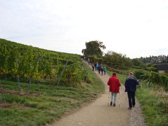 Durch die Weingärten ostwärts in Richtung Sievering