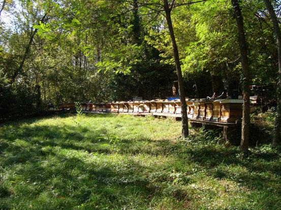 Die Bienenstöcke der Imkerei 'Bienenwerkstatt' im Sternwartepark, Arbeitsplatz der 'Wiener Biene'