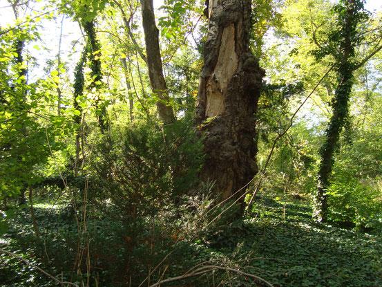 Der Sternwartepark schaut heute fast wie ein Urwald aus und doch sind hier vor ungefähr 150 Jahren keine Bäume gestanden. (Wien)