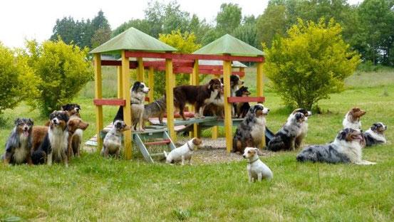 o promener son chien dans l 39 ain l 39 eider parc. Black Bedroom Furniture Sets. Home Design Ideas