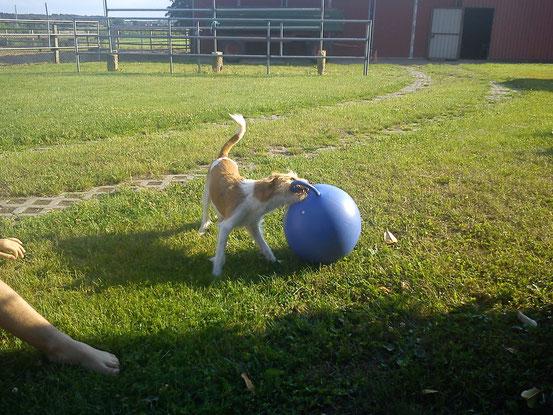 Gina nutzt eine kleine Babypause um endlich mal wieder mit ihrem großen Ball zu spielen...