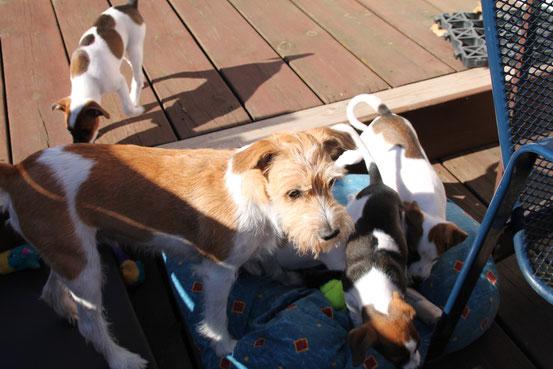 Gina mit Binou, Baffina und Beloona