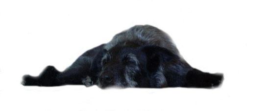 Bild: Charly-Hund macht Pause