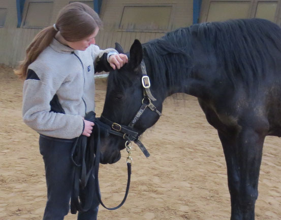 Mensch-Pferd-Beziehung