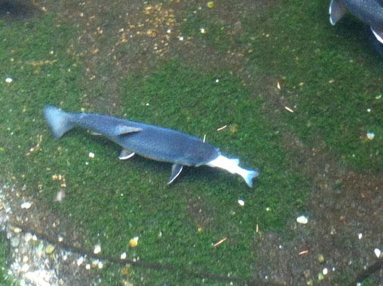 Fisch frisst Fisch