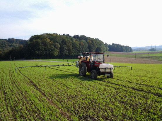 MF 240 45 Ps 12.5m AB Herbstbehandlung Herbizid Wintergerste 05.10.2012