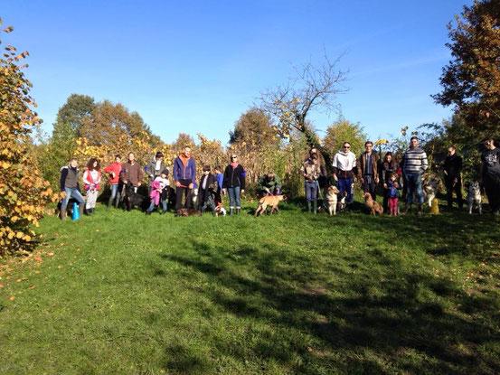 K9 games ( jeux canin) sous un beau soleil d'octobre