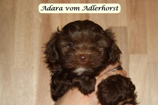 Adara als Baby, Mama ist meine Goldy