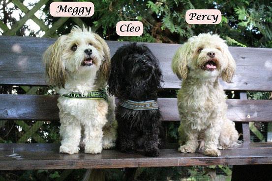 Patty, Lilli und Goldy sind die Mamas:)