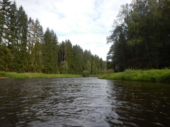 """Il fiume ha dato il nome all'omonimo brano orchestrale del compositore ceco Bedřich Smetana. L'opera è uno dei sei poemi sinfonici del ciclo Má Vlast (""""La mia patria""""), rappresenta un'evocazione del corso del fiume."""
