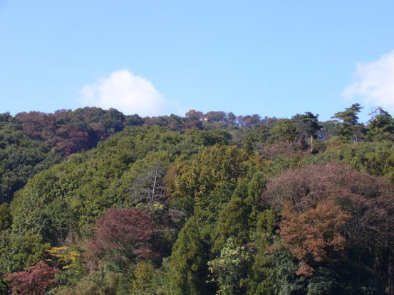 大正池より鐘撞堂山を望む(10月撮影)