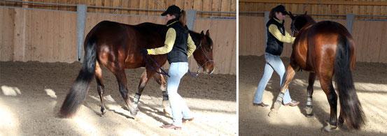Hinterhand weichen lassen (links) und Schulterverschieben (rechts)