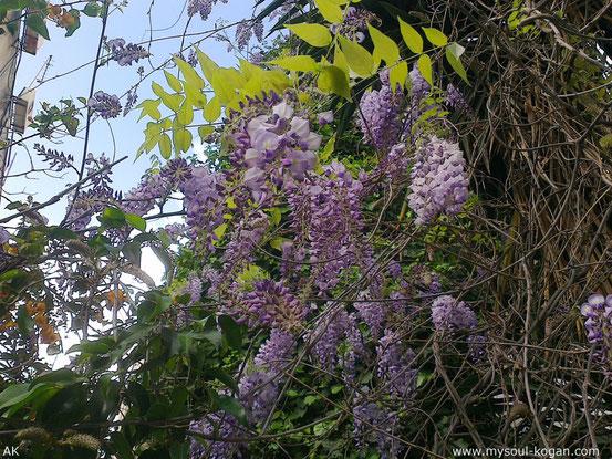 Весна - время расцвета