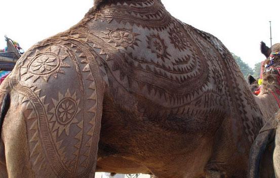 """Верблюжий фестиваль """"Биканер"""""""