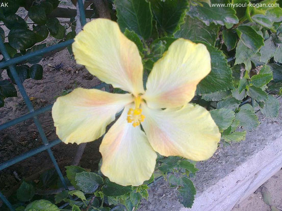 Жёлтый цвет жаркого лета